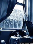 My Pets:IMAG0019