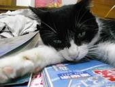 My Pets Vol.5:20110831-012.jpg