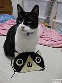 2010/01/21 貓口罩(眼罩):IMGP6192.JPG