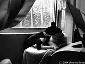 My Pets:IMAG0023