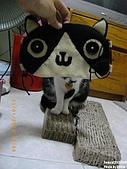 2010/01/21 貓口罩(眼罩):IMGP6199.JPG