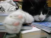 My Pets Vol.5:20110831-014.jpg