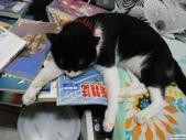 My Pets Vol.5:20110831-015.jpg