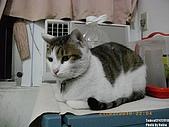 2010/01/21 貓口罩(眼罩):IMGP6203.JPG