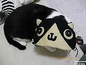 2010/01/21 貓口罩(眼罩):IMGP6228.JPG