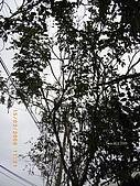 20090315-龍潭-湖口老街:20090315Choko02.jpg