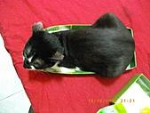 2010/08/16 拜拜啦, 買個禮盒吧.:20100816-P02.JPG
