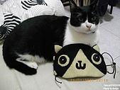 2010/01/21 貓口罩(眼罩):IMGP6229.JPG