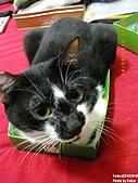 2010/08/16 拜拜啦, 買個禮盒吧.:20100816-P04.JPG