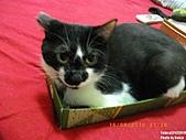 2010/08/16 拜拜啦, 買個禮盒吧.:20100816-P05.JPG