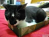 2010/08/16 拜拜啦, 買個禮盒吧.:20100816-P06.JPG