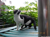 My Pets Vol.2:MP20090913-106.JPG