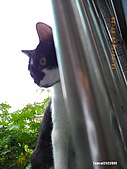 My Pets Vol.2:MP20090913-107.JPG