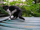 My Pets Vol.2:MP20090913-108.JPG