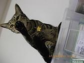 My Pets Vol. 3:2010601-01.JPG