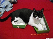 2010/08/16 拜拜啦, 買個禮盒吧.:20100817-P01.JPG