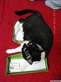 2010/08/16 拜拜啦, 買個禮盒吧.:20100817-P02.JPG