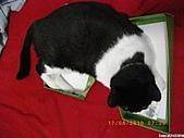 2010/08/16 拜拜啦, 買個禮盒吧.:20100817-P03.JPG