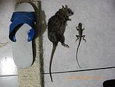 20090222-三坑鐵馬道:我們家貓放風帶回來的紀念品