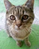 2010/02/23 丸子貓:2010223-04.jpg