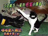 My Pets:IMAG0753