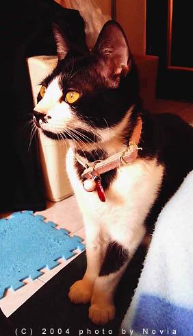 My Pets:IMAG0885
