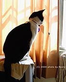 My Pets:IMAG0891