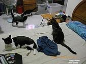20090716:20090716-13.jpg