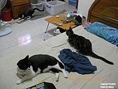 20090716:20090716-15.jpg