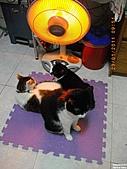 My Pets Vol.4:20110123-01.JPG