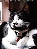 My Pets:IMAG0930