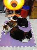 My Pets Vol.4:20110123-03.JPG