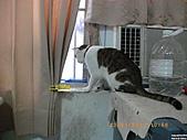 My Pets Vol.4:20110123-04.JPG