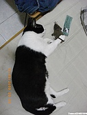My Pets Vol.2:MP20090912-01.JPG