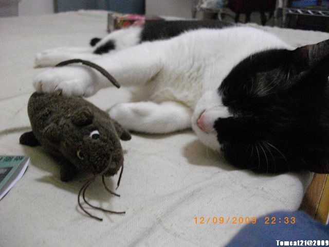 My Pets Vol.2:MP20090912-02.JPG