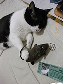 My Pets Vol.2:MP20090912-03.JPG