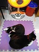 My Pets Vol.4:20110123-05.JPG