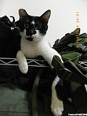 My Pets Vol.2:MP20090912-04.JPG