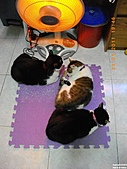 My Pets Vol.4:20110123-06.JPG