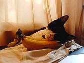 My Pets:二世的香蕉夢