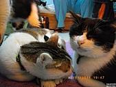 My Pets Vol.4:20110123-07.JPG