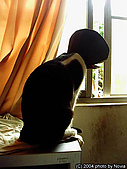 My Pets:寂寞的燈罩