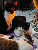 My Pets Vol.4:20110123-09.JPG