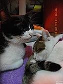 My Pets Vol.4:20110123-10.JPG