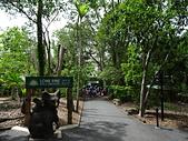 遠走高飛:Lone Pine Koala Sanctuary.JPG