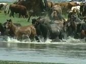 蒙古元朝:牛馬渡河.jpg
