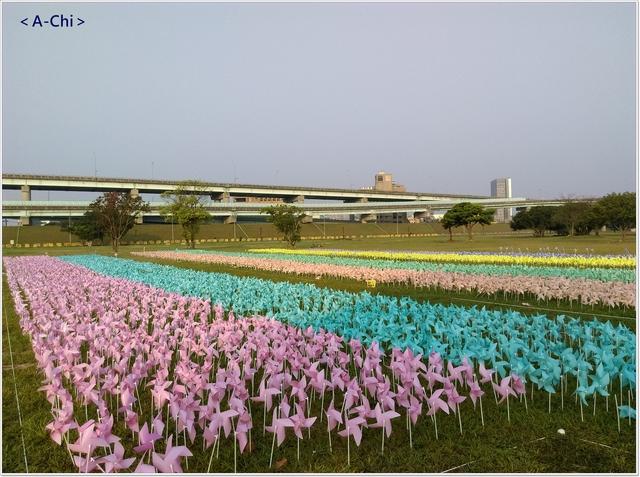 小型風車 - 【新北市。三重】幸福水漾公園~白色苜蓿