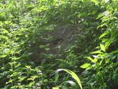 【竹縣】關西 四寮溪戶外生態教室(步道):蜘蛛網