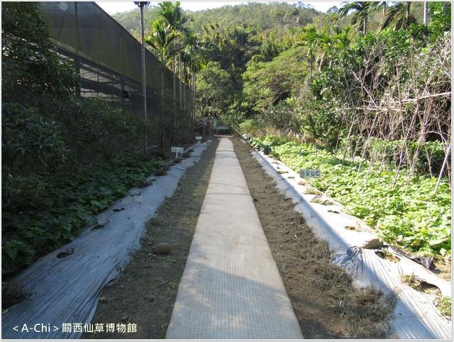 仙6.JPG - 【新竹。關西】仙草博物館