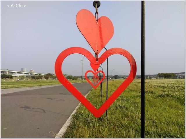 心心相印 - 【新北市。三重】幸福水漾公園~白色苜蓿